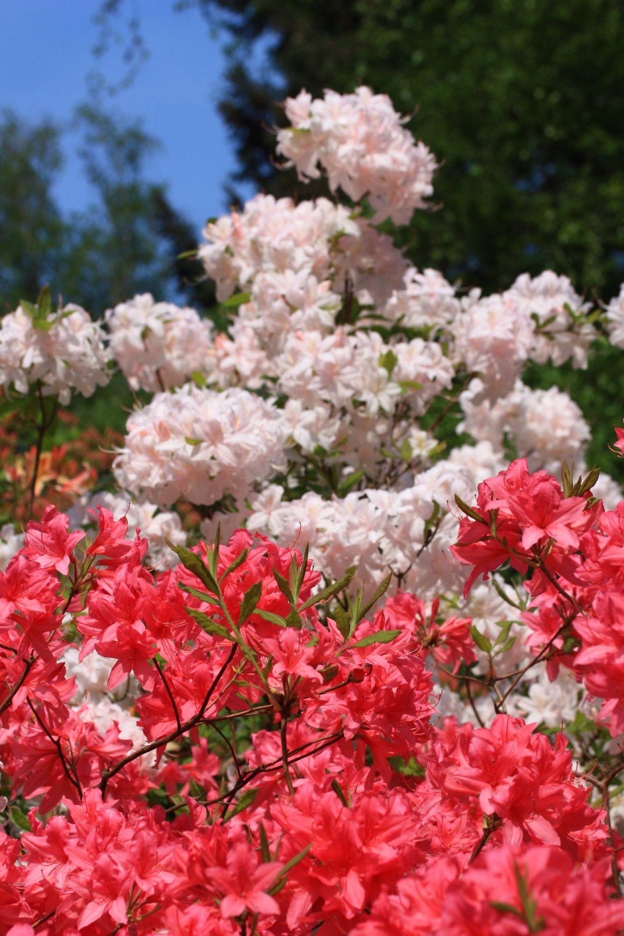 Why So Serieus Flowery Spring Has Sprung