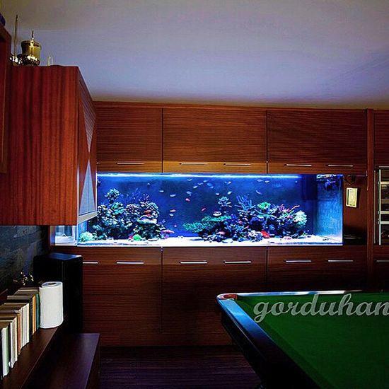 Amazing Coral Reefs My Reef Tank Aquarium Reef Saltwater Aquarium Coralreef Design