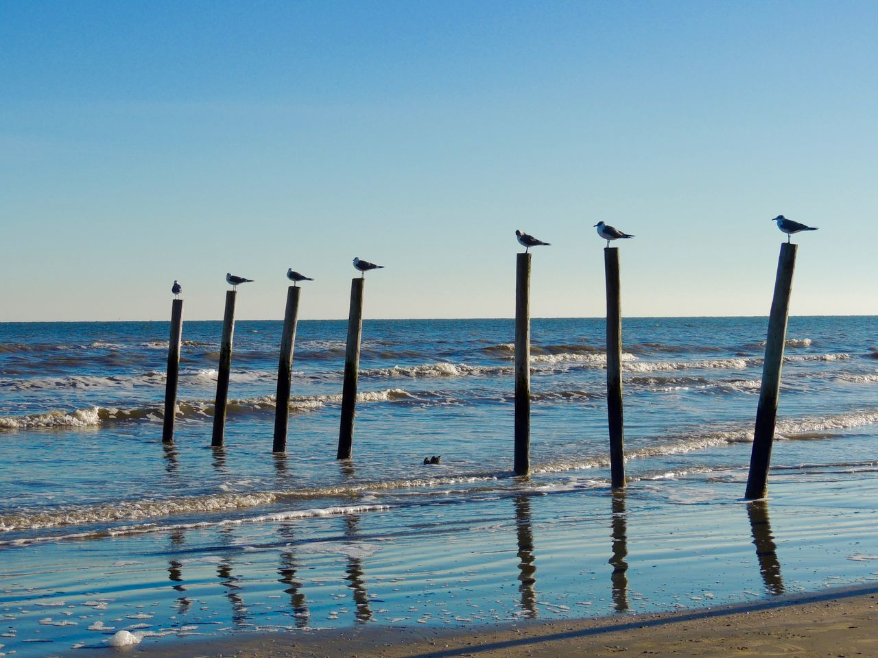 water, sea, wooden post, no people, day, nature, outdoors, horizon over water, clear sky, beauty in nature, scenics, bird, sky, beach, blue, animal themes