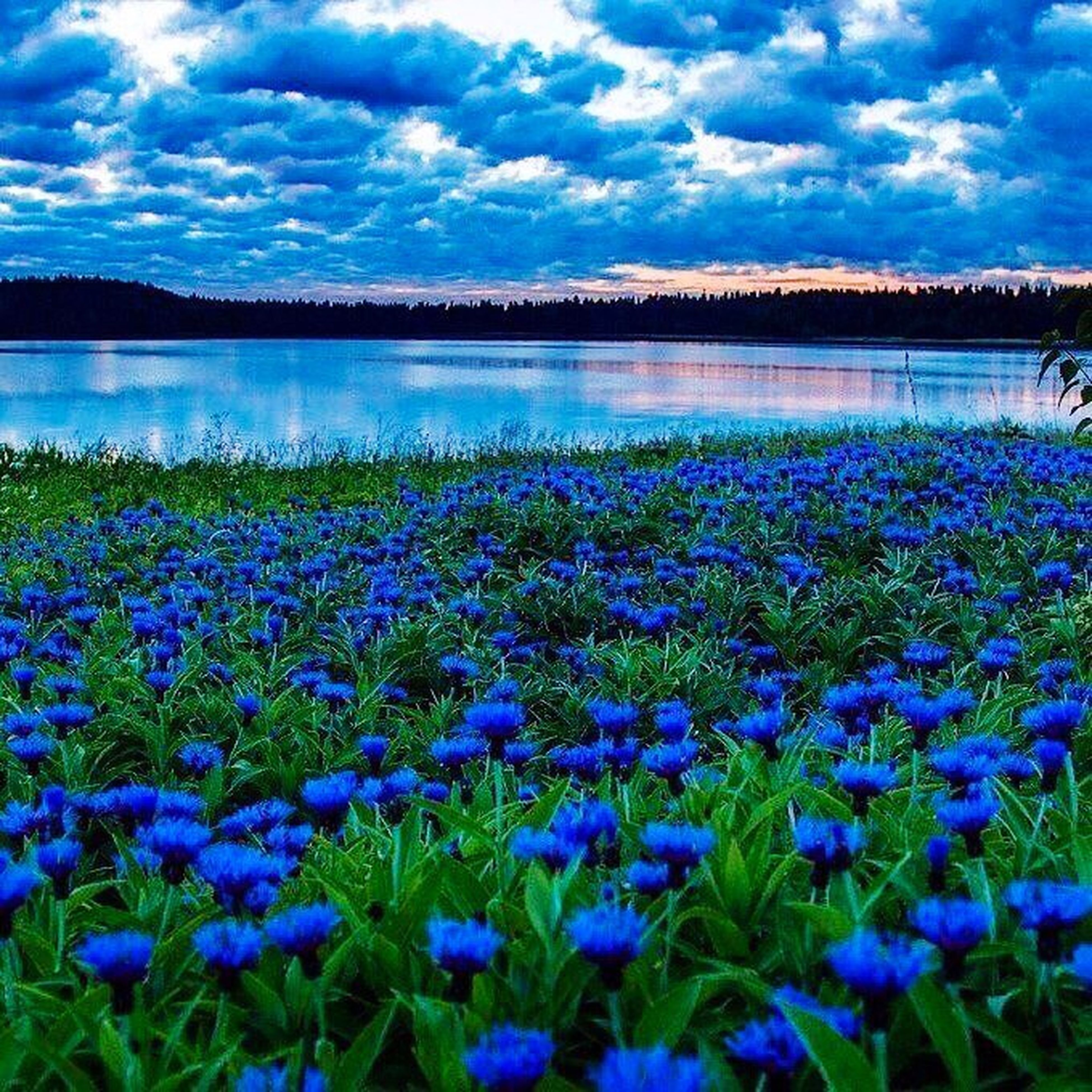 beauty in nature, nature, tranquility, scenics, tranquil scene, lake, growth, outdoors, cloud - sky, sky, water, flower, day, no people, plant, idyllic, blue, travel destinations, landscape, freshness, grass, fragility