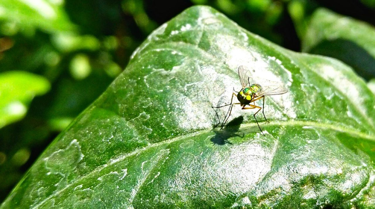 aah! What a relief.... Fly Scratching Back Green Leaf Nature Photography Nature_collection Nature Beauty Maximum Closeness Sunnyday☀️