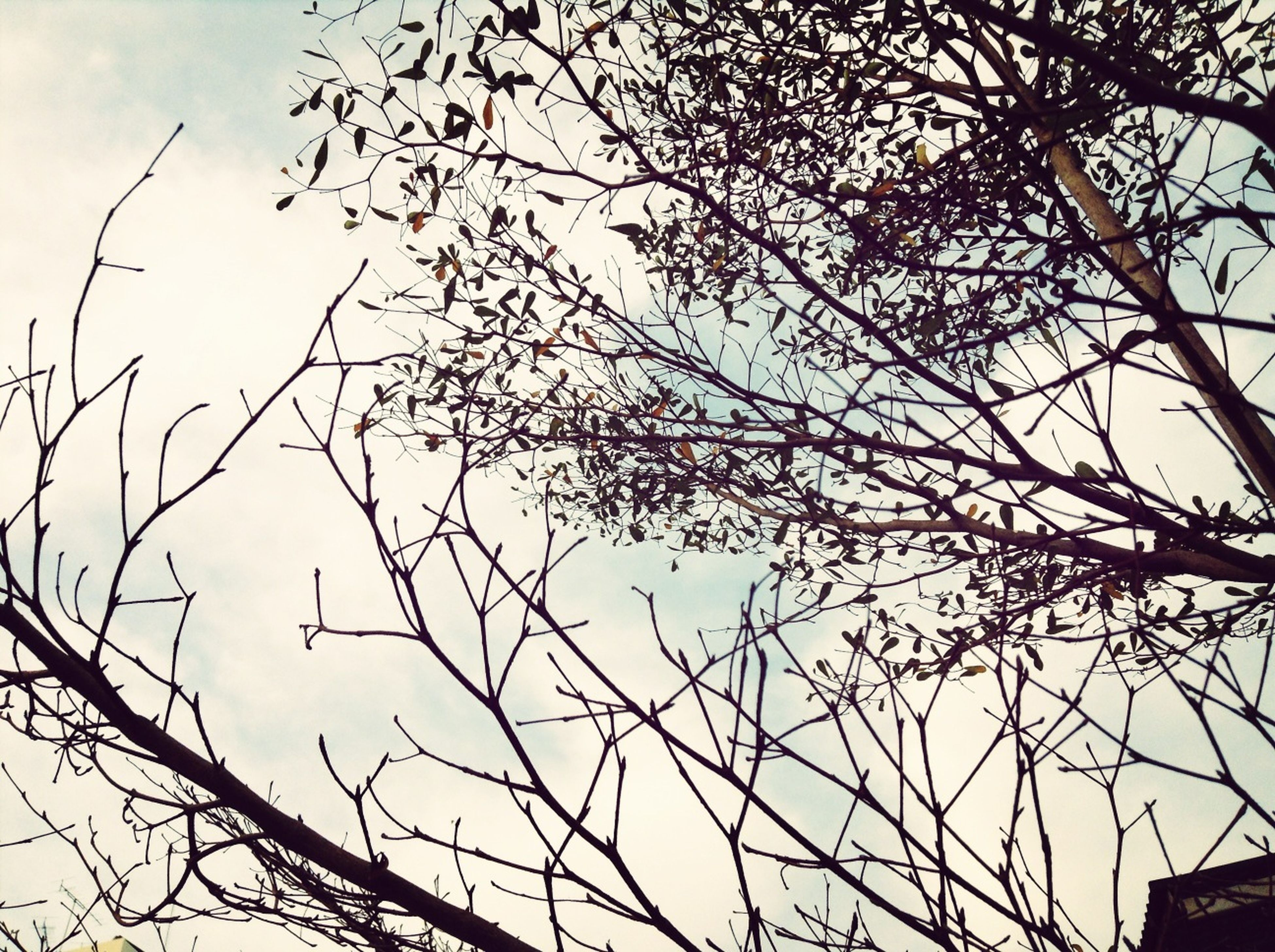 low angle view, bare tree, branch, tree, sky, clear sky, nature, silhouette, outdoors, tranquility, high section, day, no people, beauty in nature, growth, blue, built structure, tree trunk, scenics, building exterior