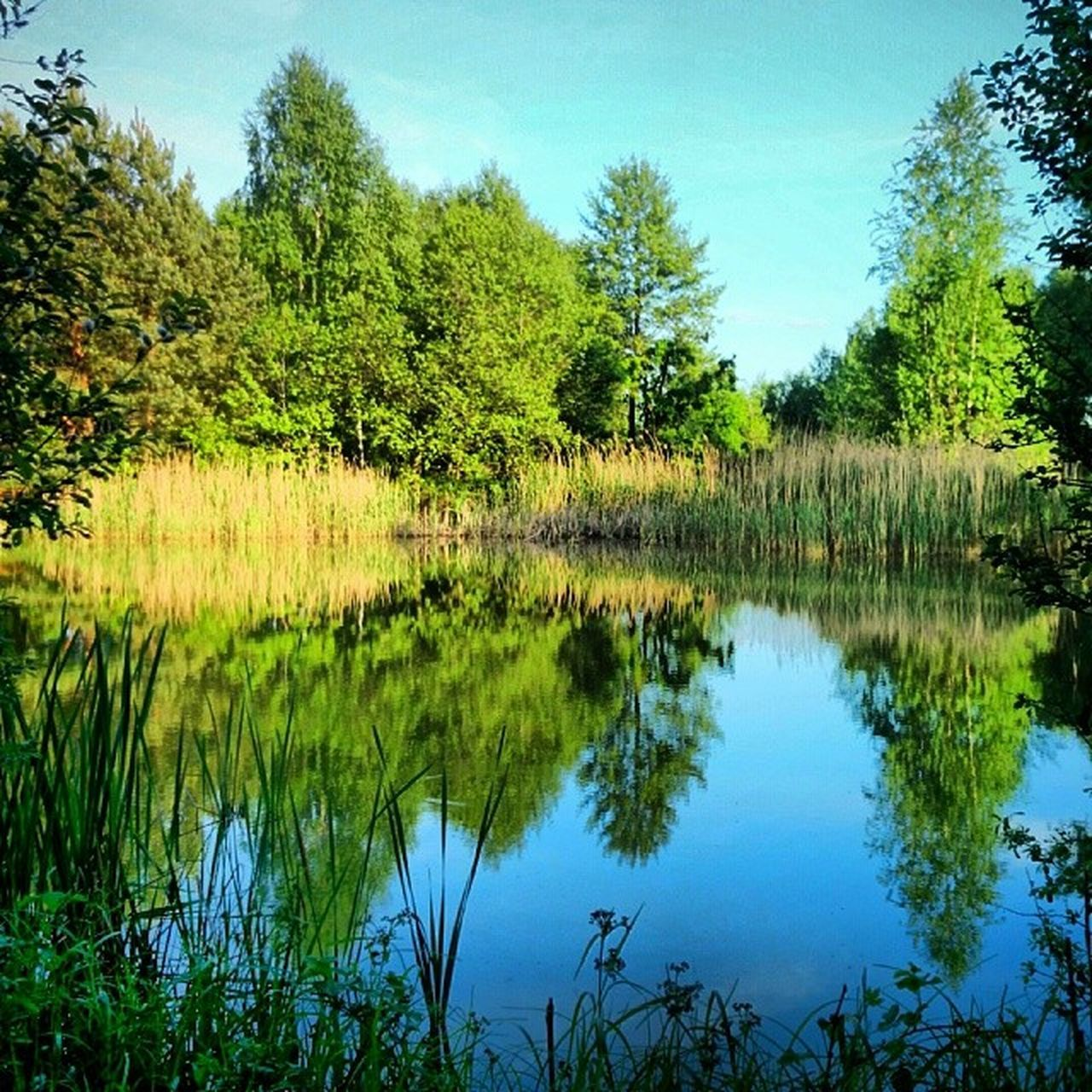 reflection, lake, tree, nature, water, beauty in nature, tranquil scene, tranquility, scenics, no people, outdoors, vegetation, growth, forest, day, landscape, sky