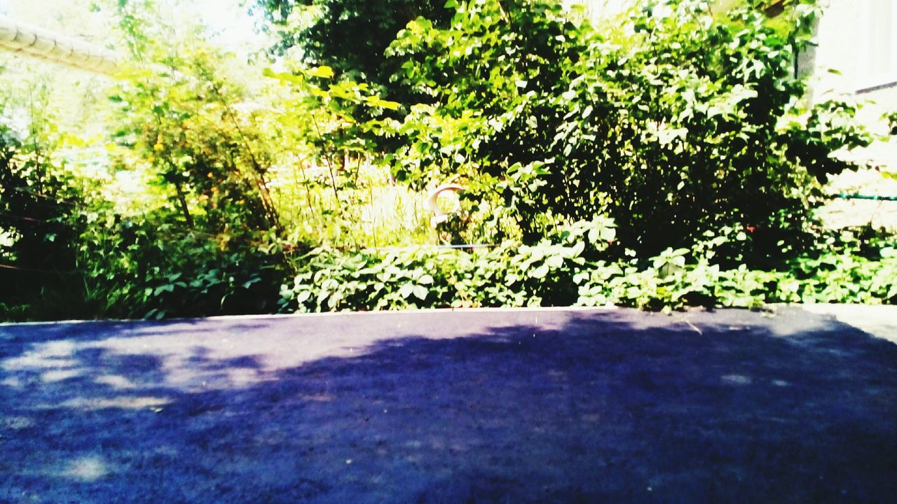 growth, nature, plant, green, tissue, tree, scenery, foliage, no people, outdoors, day