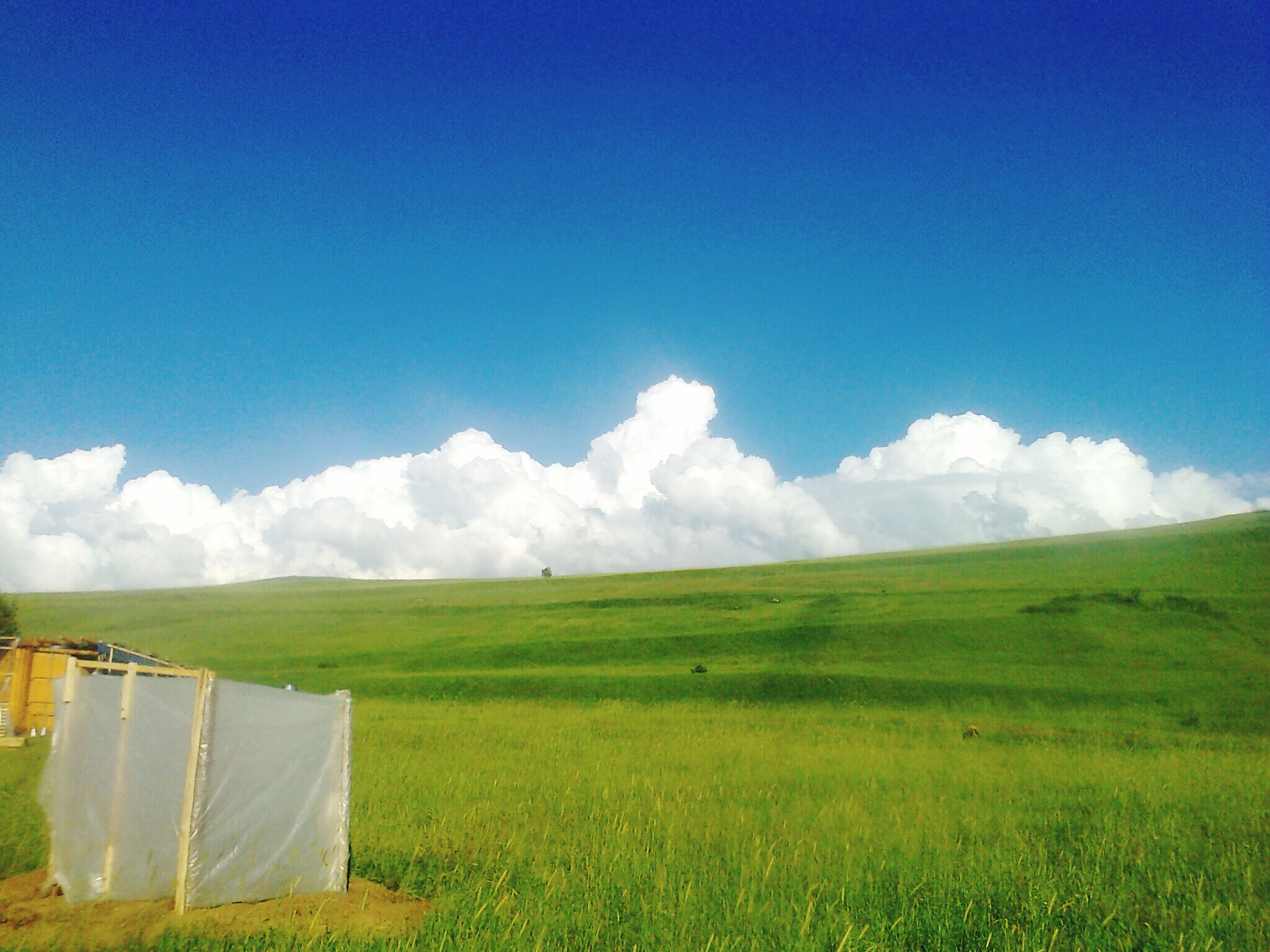 field, grass, landscape, sky, blue, tranquil scene, tranquility, grassy, scenics, rural scene, beauty in nature, nature, cloud, green color, cloud - sky, agriculture, farm, day, horizon over land, non-urban scene