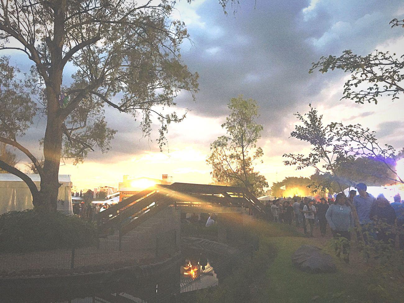 City Tree FreeTime People Sunset Cloud - Sky Large Group Of People Disfrutando De La Vida Concert Festival Festivalcoordenada