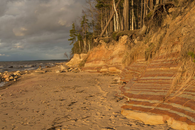 sandstone cliffs at sunset Cloud Cloud - Sky Clouds, Coast, Coastline, Sand, Sandstone, Sandstone Cliffs, Sea, Shore, Stone, Stones, Sunset, Tree, Trees, Water, Waves Cloudy Coastline Day Growth Idyllic Landscape Nature No People Non Urban Scene Non-urban Scene Outdoors Remote Rock - Object Rock Formation Scenics Shore Sky Tourism Tranquil Scene Tranquility Travel Destinations Tree