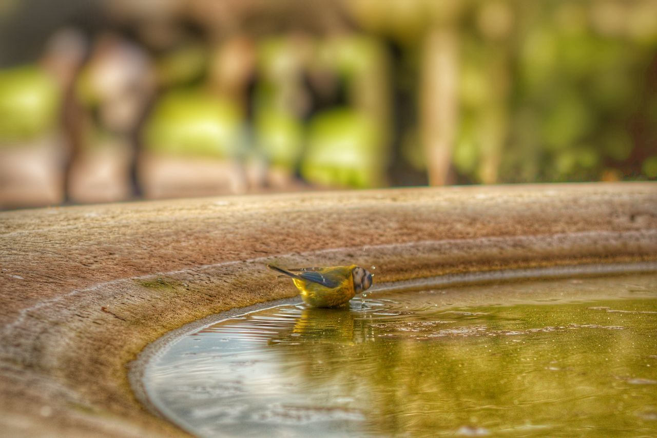 one animal, animals in the wild, animal themes, water, animal wildlife, nature, no people, outdoors, day, bird, close-up