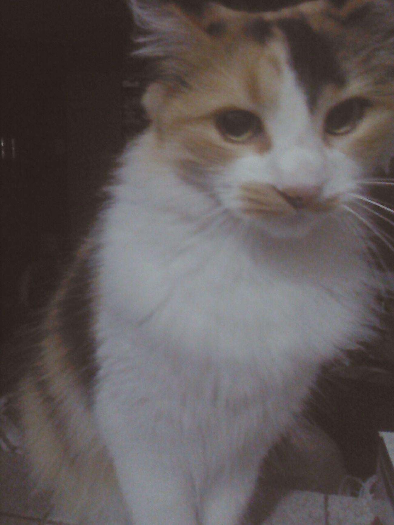 Cat Gatita  Gata Amoreterno ❤
