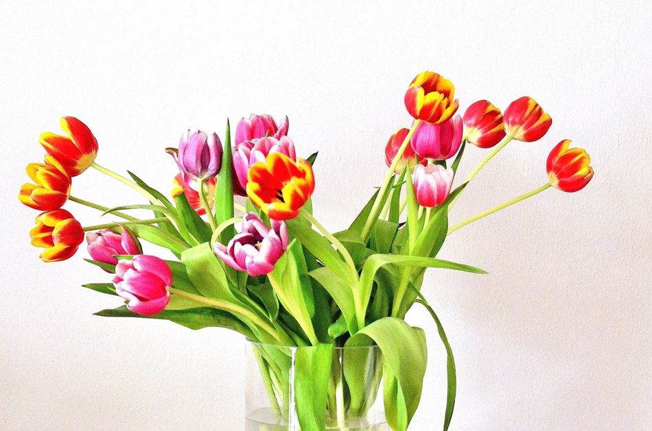 Beautiful stock photos of tulip, Beauty In Nature, Blooming, Close-Up, Cut Out