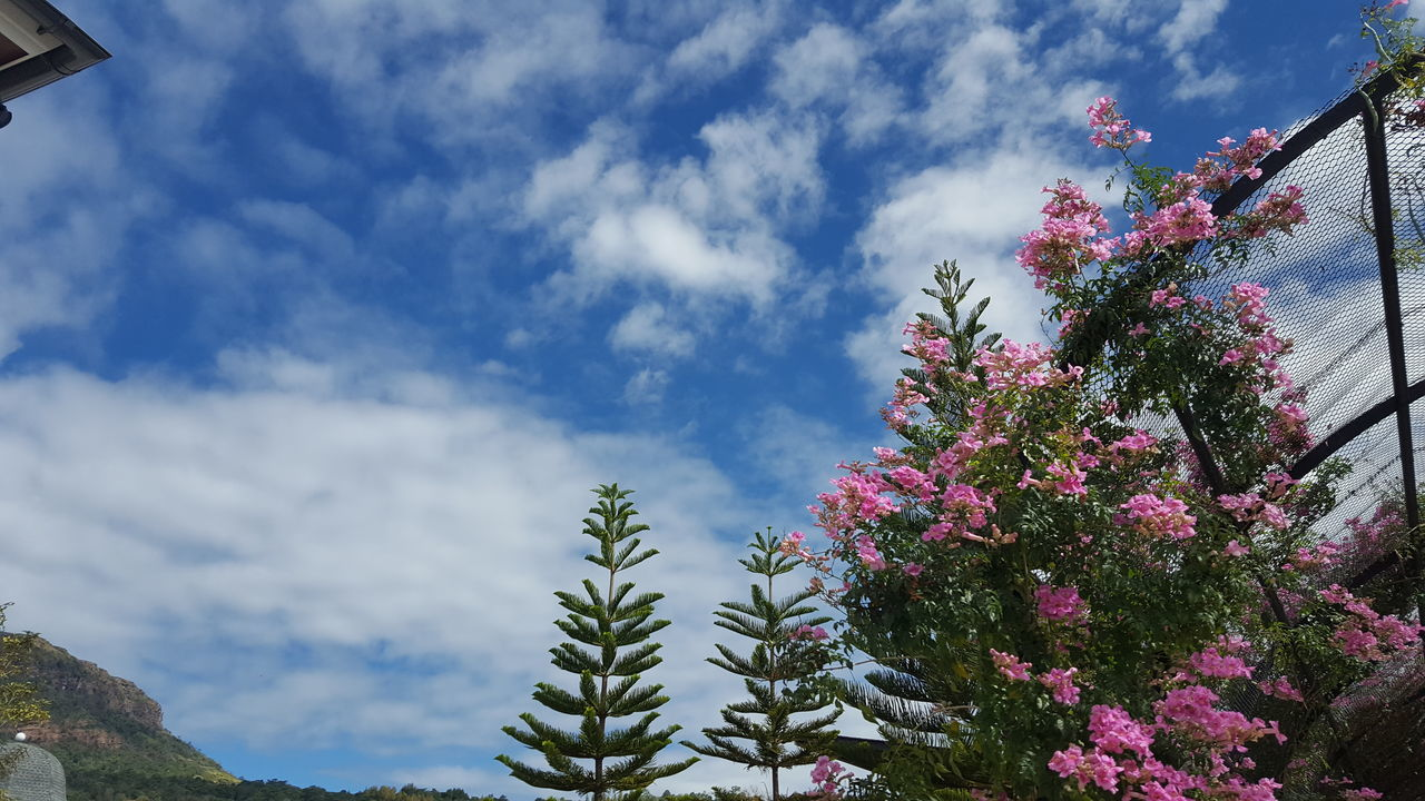 low angle view, growth, tree, nature, beauty in nature, cloud - sky, sky, flower, day, no people, outdoors, pink color, freshness, fragility, branch, building exterior, architecture