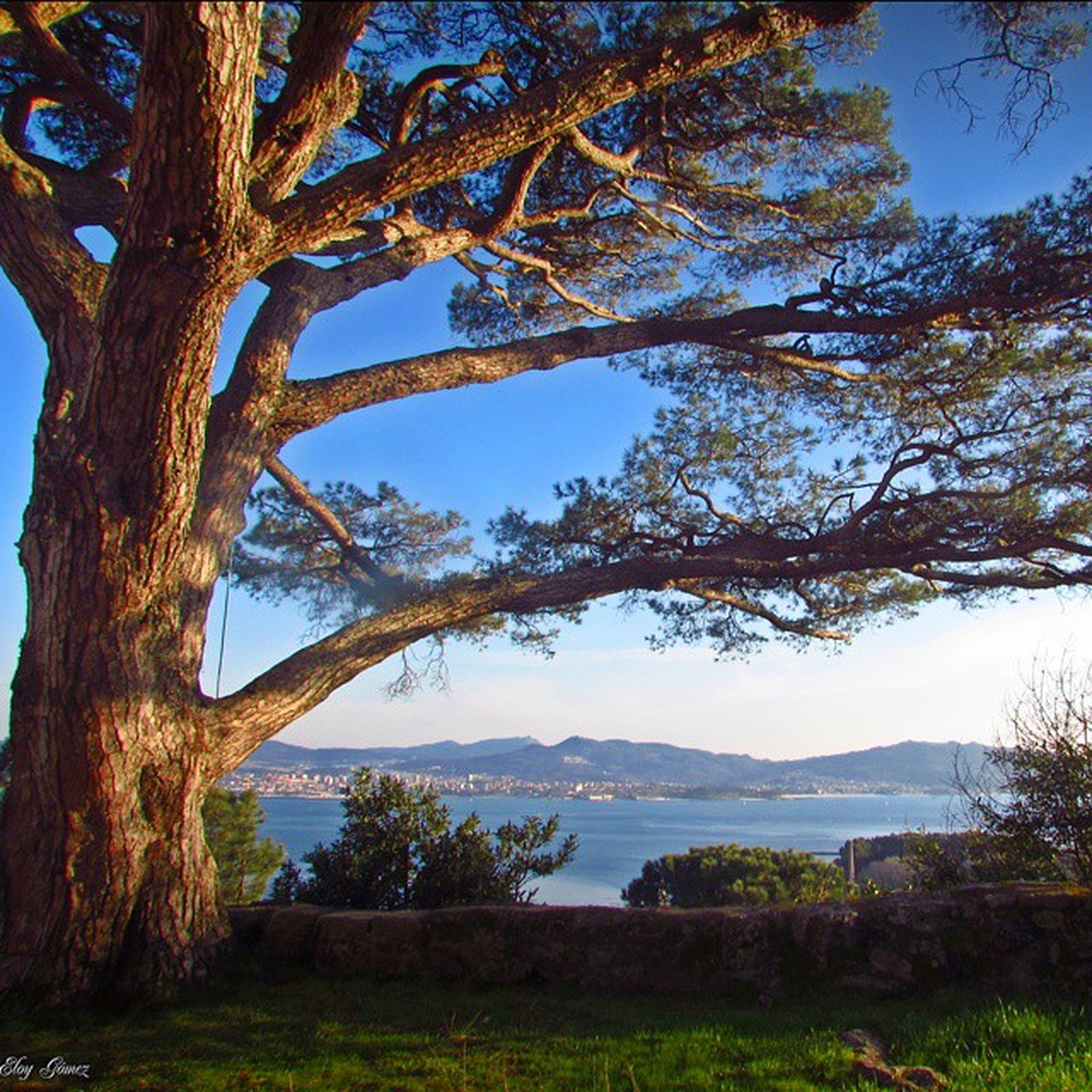 tree, tranquility, branch, tranquil scene, scenics, nature, beauty in nature, tree trunk, growth, water, sky, lake, landscape, bare tree, clear sky, idyllic, non-urban scene, day, outdoors, no people