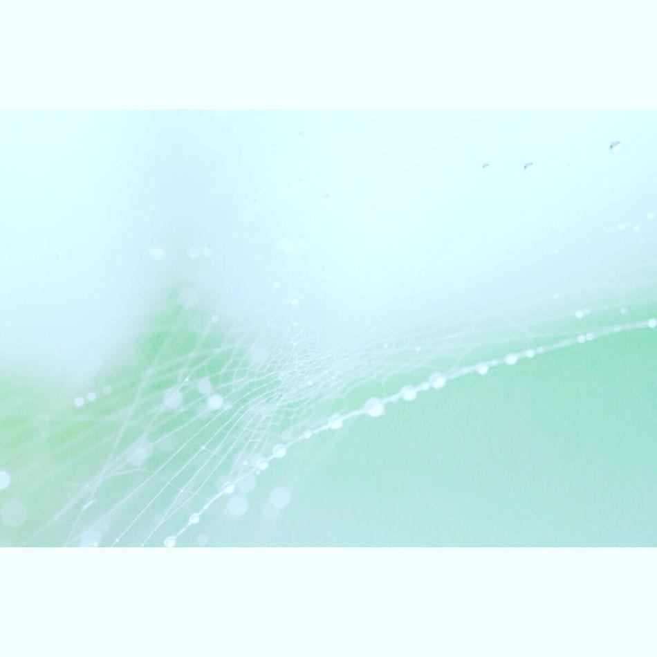 夏が急ぎ足で終わりそう Natural Botanical EyeEm Nature Lover マクロ Macro 雫 Drop 蜘蛛の糸