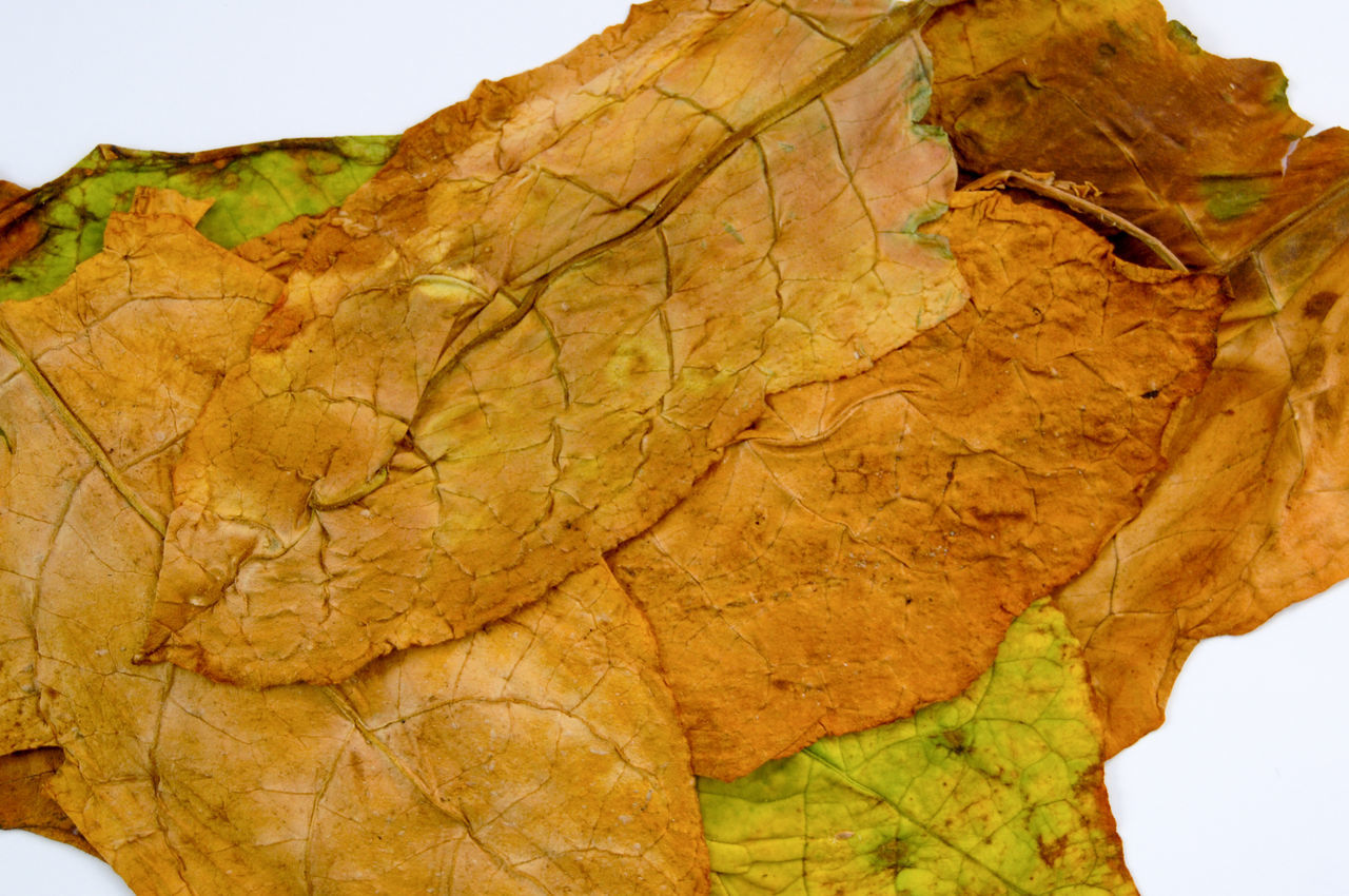 leaf, autumn, dry, change, nature, day, close-up, brown, outdoors, branch, beauty in nature, no people, plant, landscape, fragility, maple