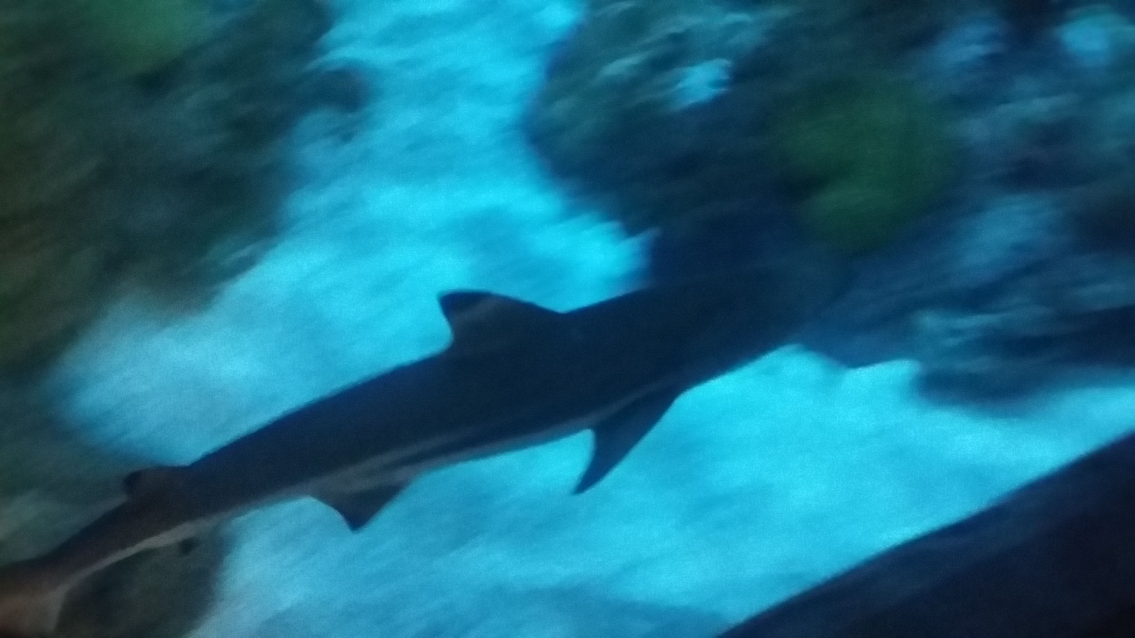 fish, animal themes, sea life, underwater, one animal, swimming, no people, shark, animals in the wild, water, nature, low angle view, aquarium, day, undersea, mammal, sea, outdoors, close-up