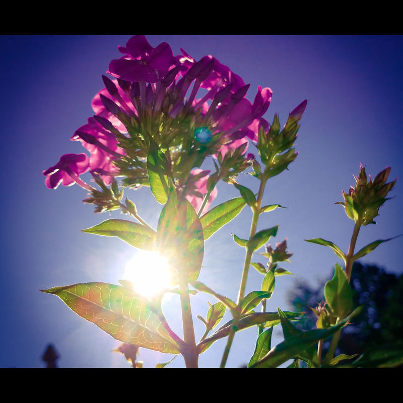 Let it be a great day! Sun Flower Sky Sunlight No People Summer Nature Outdoors Plant Freshness Beauty In Nature Close-up Photography outdoors Photographylovers Artistic Photography Luis Daniel Photography Green Color Majestic Nature Dynamic Uplift Walking Around Taking Pictures Growth Flower Head Cloud - Sky