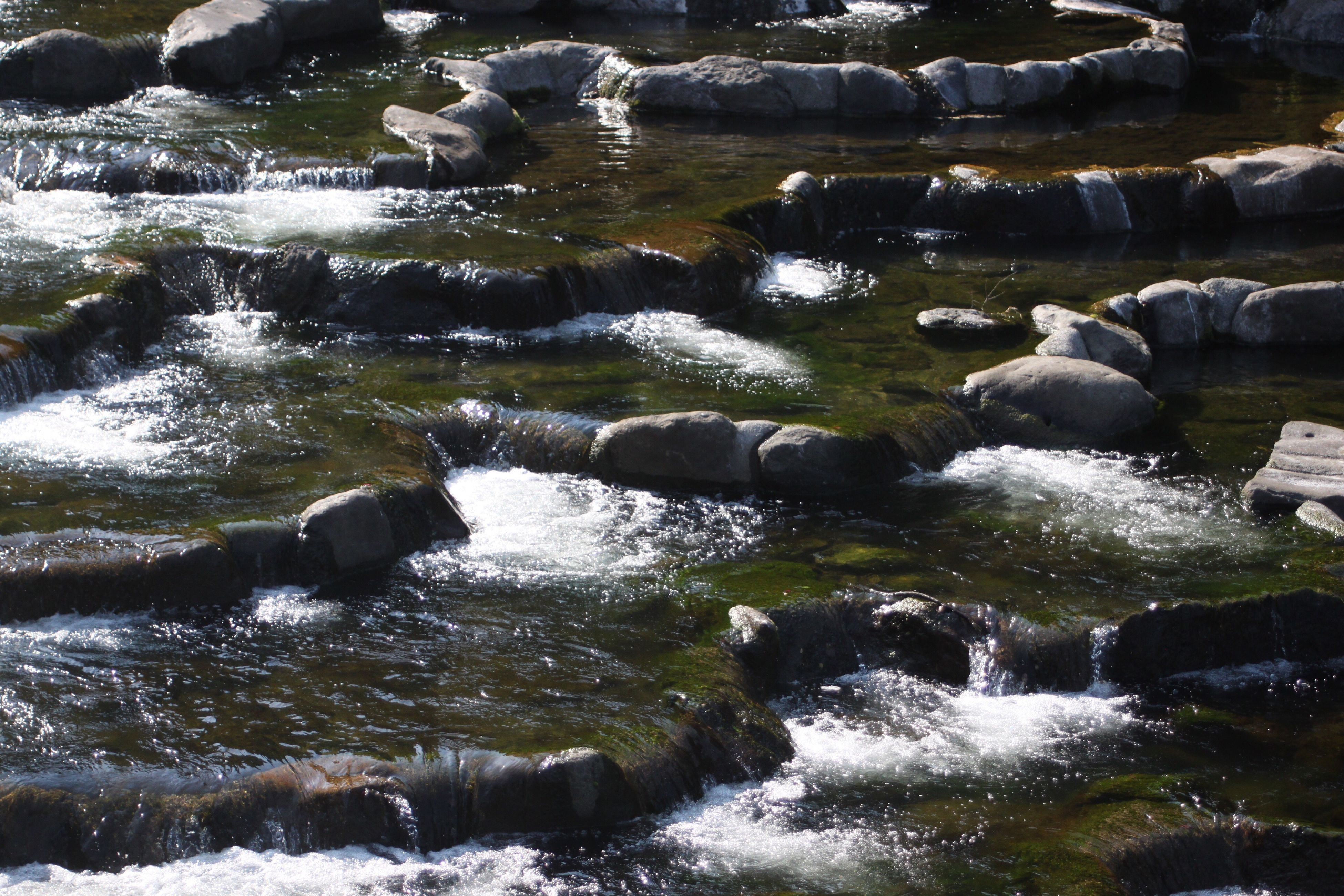 water, no people, motion, nature, outdoors, day, river, beauty in nature, waterfall, animal themes, mammal