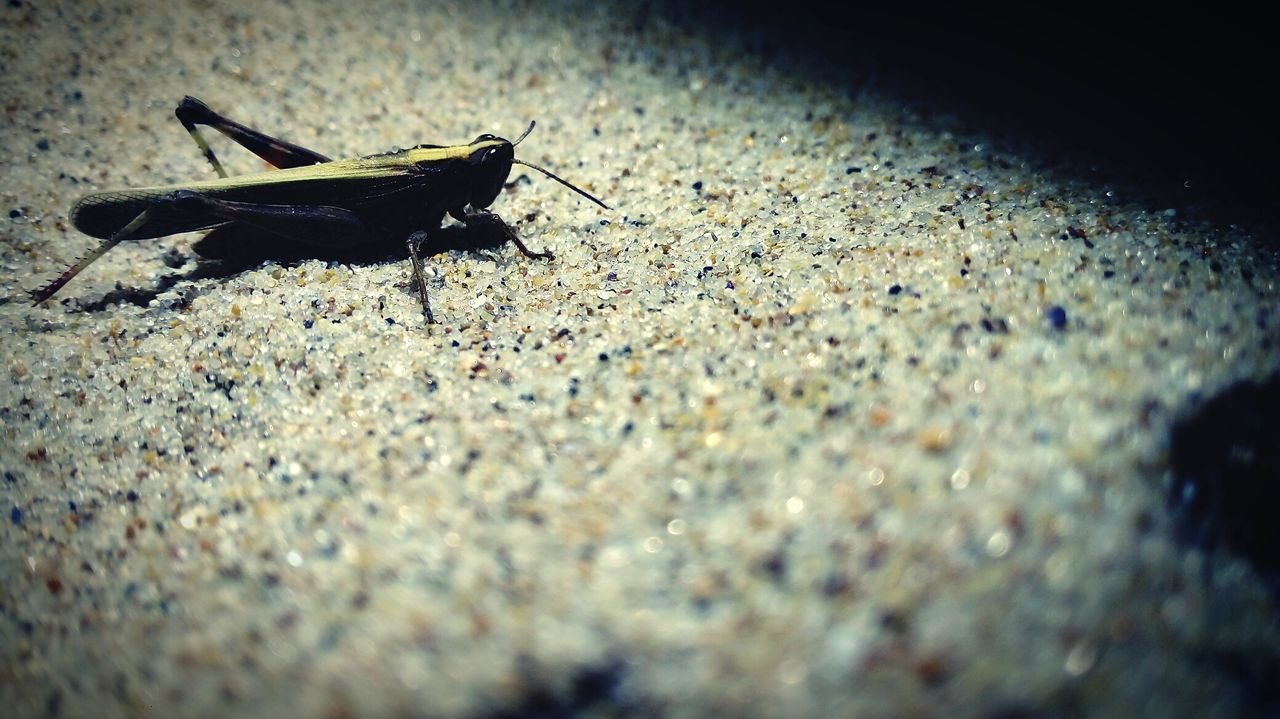 Beach Night Insect