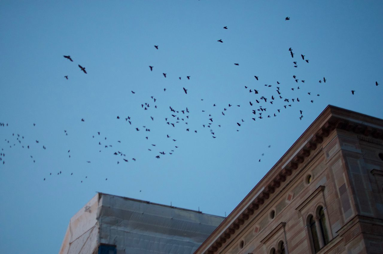 Birds over the Skeppsholmen bridge. Animal Themes Animals In The Wild Architecture Bird Building Exterior Built Structure City Day Flock Of Birds Flying Large Group Of Animals Low Angle View Migrating Nature No People Outdoors Sky