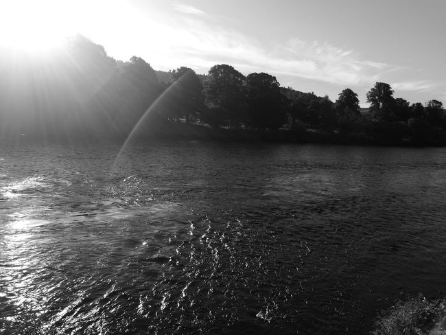 Water Tranquil Scene Scenics Nature Day Sunny Sun Outdoors Sunbeam Sunlight Tree Tranquility River Tay Monochrome Nature Simplicity Scotland Riverscape