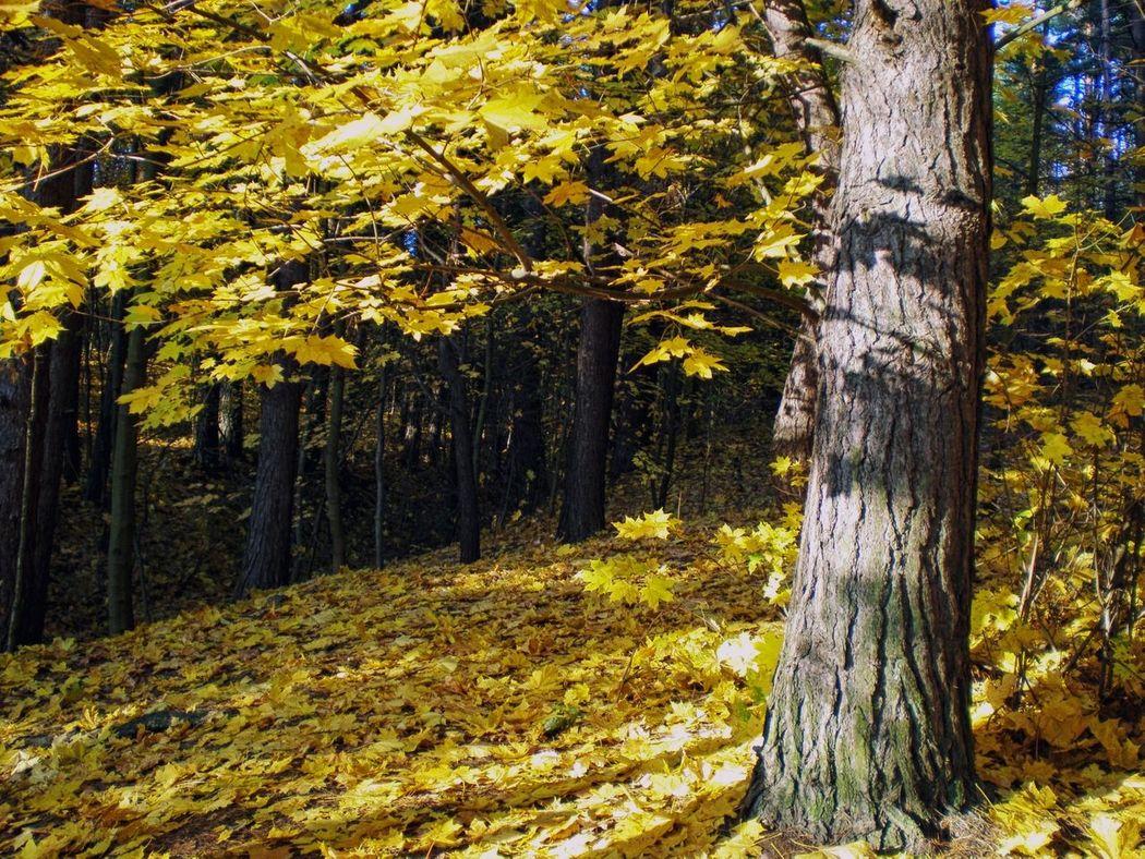 Atumn Colors Of Atumn Lithuania Nature