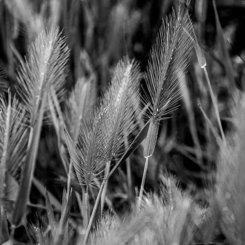 Sony Nex7 Wheat Monochrome