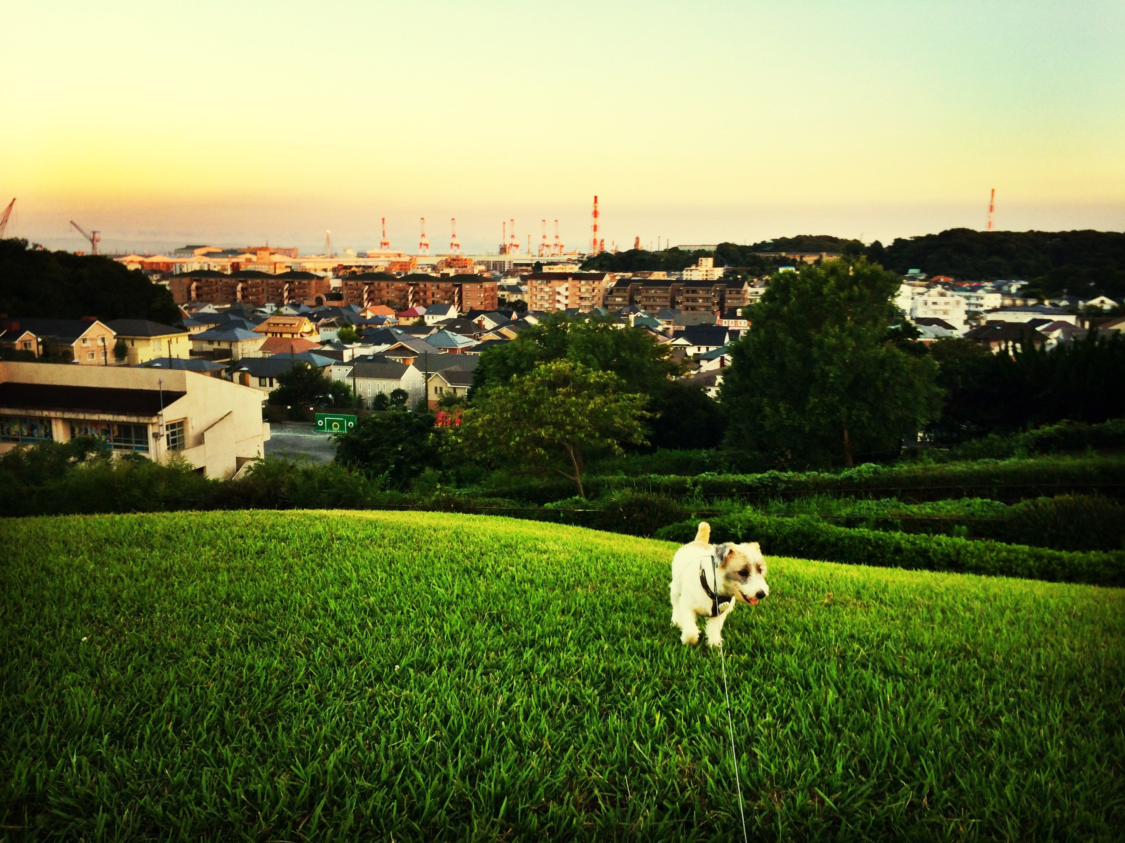 animal themes, domestic animals, grass, building exterior, architecture, mammal, built structure, one animal, field, sky, pets, house, grassy, clear sky, sunset, landscape, nature, no people, outdoors, copy space