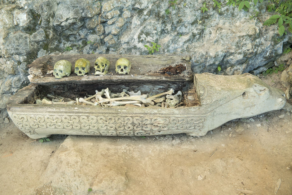 Hundred thousand years hanging coffin and stone graveyard of Toraja People display with human skuls and skeletons in Ke'Te Kesu located at North Toraja. Animal Themes Beauty In Nature Burial Burial Site Coffins  Day Dead Death Nature No People Outdoors Textured  Tree