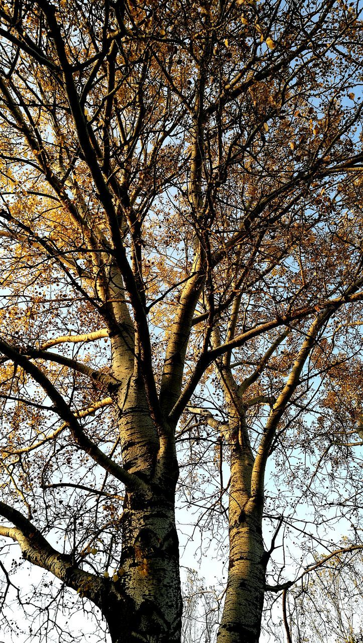 tree, low angle view, branch, nature, day, outdoors, tranquility, no people, growth, beauty in nature, forest, bare tree, tree trunk, sky