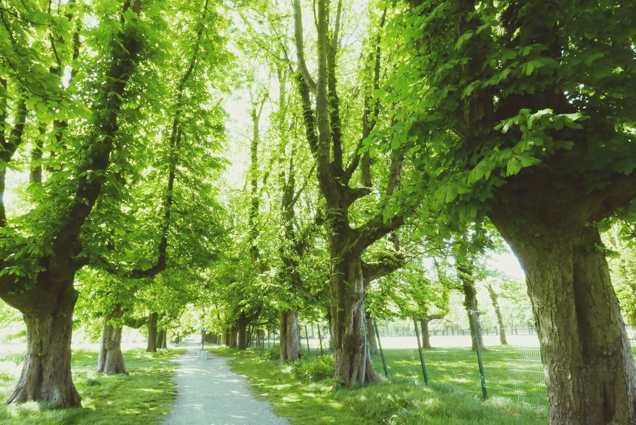 tree, tree trunk, nature, growth, tranquility, beauty in nature, tranquil scene, green color, scenics, day, landscape, no people, the way forward, outdoors, branch, grass