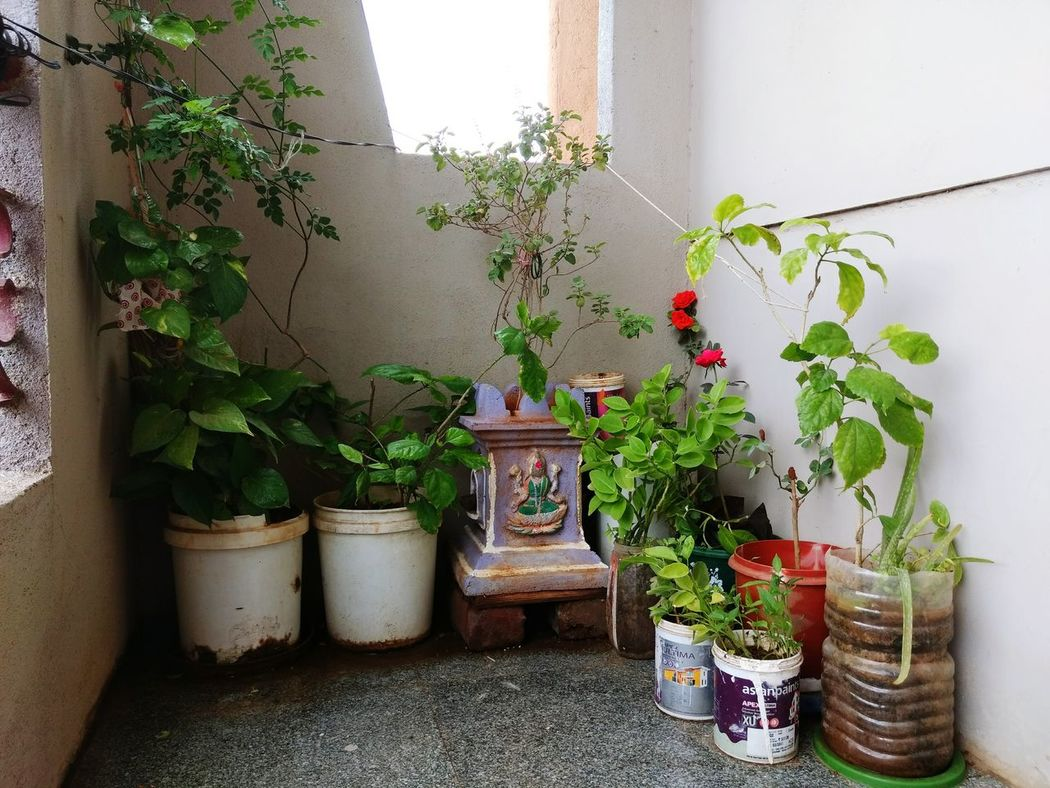 Fresh Filter Rose Plant Green Plant Paint Buckets Recycling Goddesses Lord Lakshmi Bricks Rose - Flower Red Roses Tulsi Leaves MoTo G4 OO Mission Fine Art Photography Adventure Club Showcase July Colour Of Life