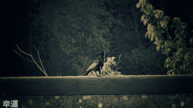 Crow Raven Soulsurvivor Darkness And Light Dark Art Riverside Soulslayer Souleater Monochrome Rebirth