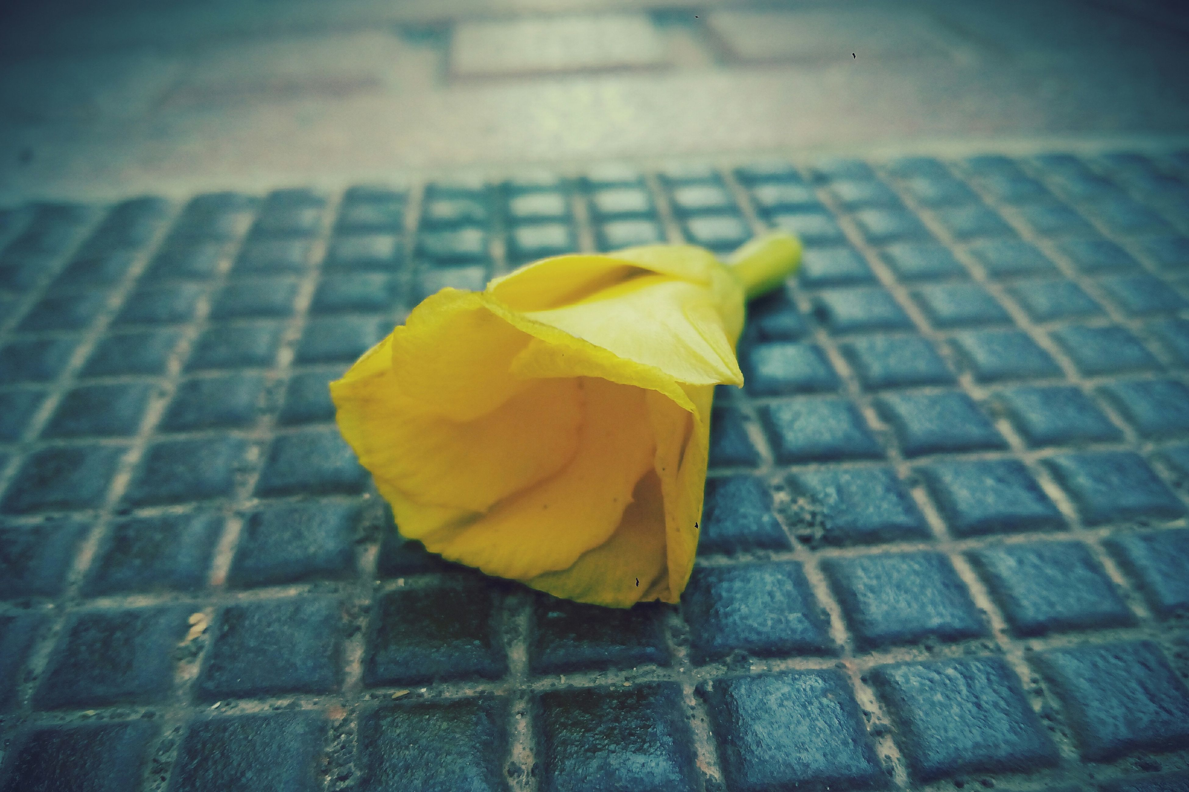 yellow, high angle view, single object, season, close-up, leaf, change, flooring, footpath, focus on foreground, day, no people, fragility, tranquility, stone material, symbol
