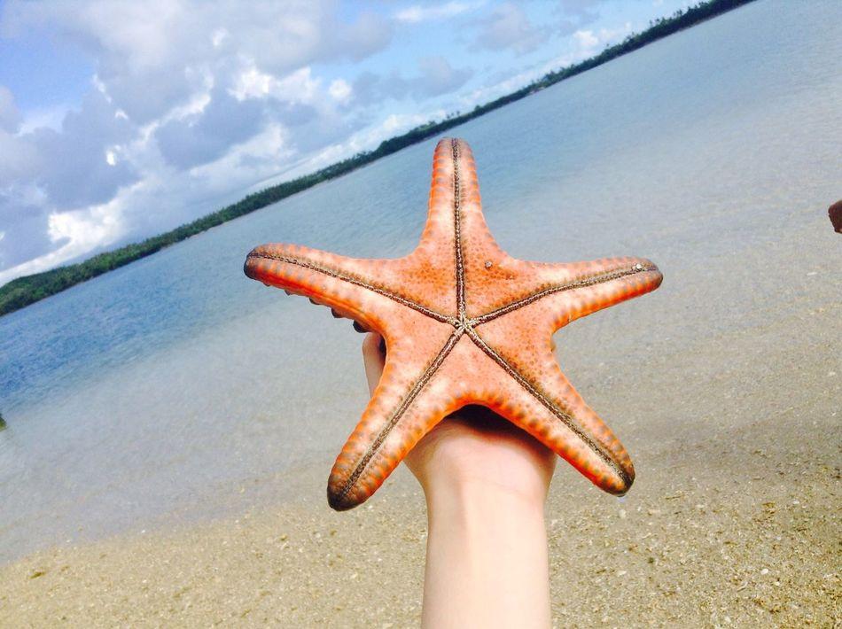 Beautiful stock photos of starfish, Animal Themes, Beach, Close-up, Cloud - Sky