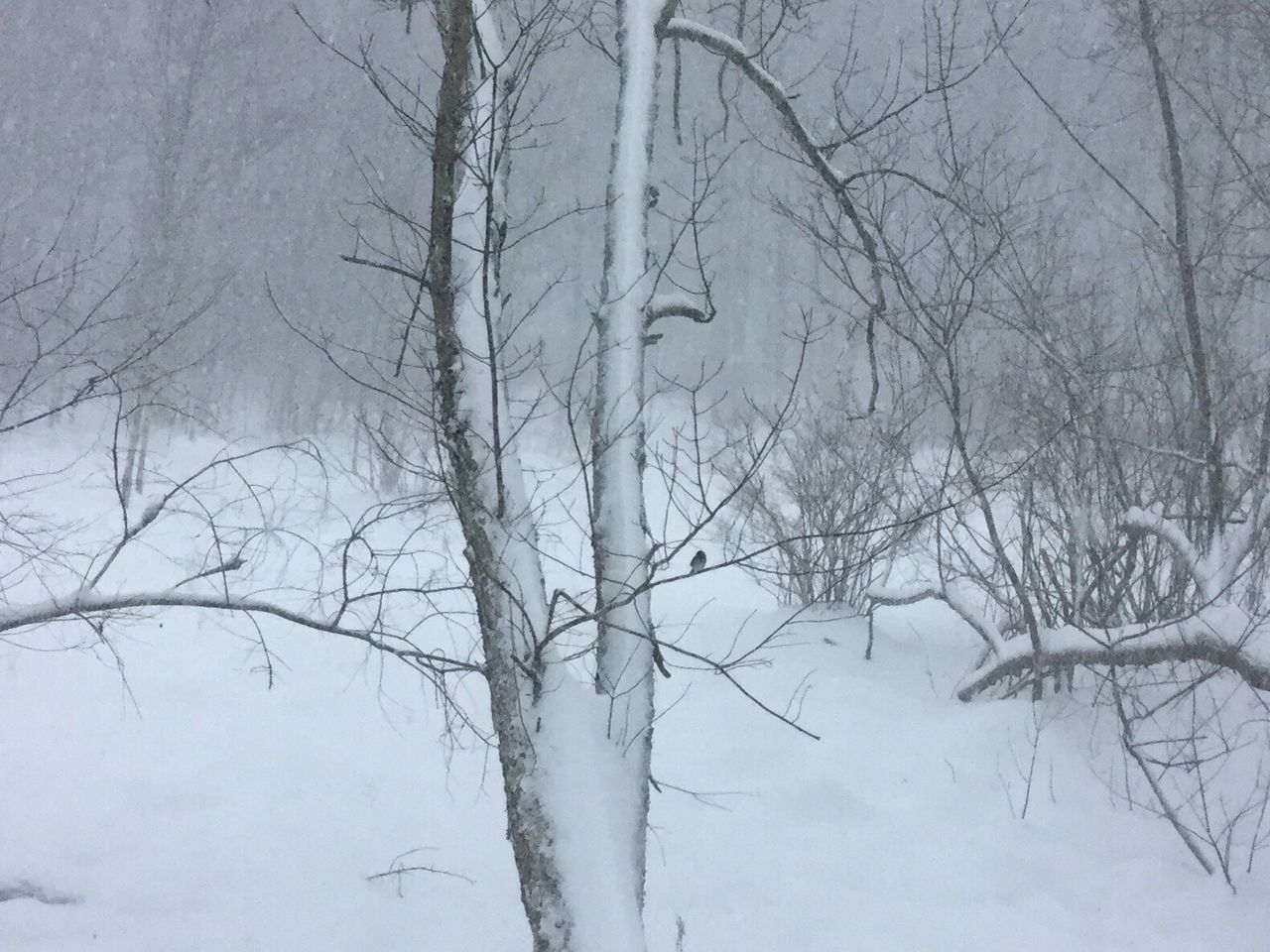 Winter Snow Bare Tree Cold Temperature Nature Weather No People Outdoors Day Beauty In Nature Eye Em New Here lone bird