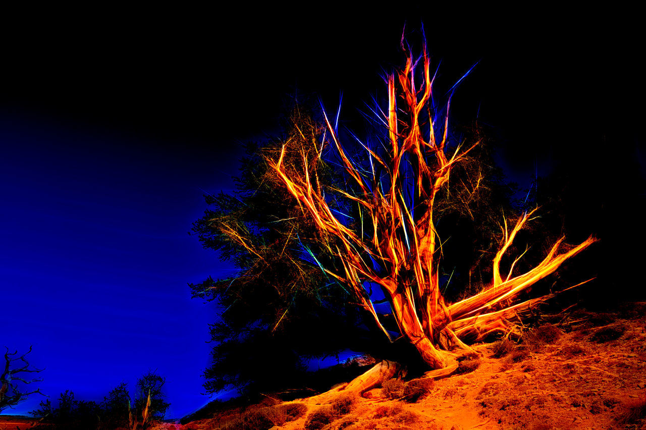 Beauty In Nature Blue Bristlecone Pine Tree Erupting Exploding Heat - Temperature Mountain Nature Night No People Outdoors Power In Nature Sky Topaz Glow Tree
