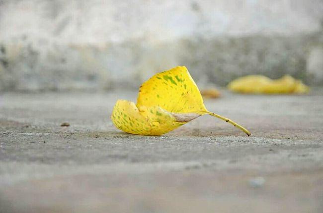 Bentornato autunno. Autumn Autumn Leaves Autunno  Nature Autumn Colors Colori D'autunno Giallo Yellow Yellow Leaves Leaf Foglie Gialle Fallen Leaf That'sme Hello Word Today's Pic Today's Photo