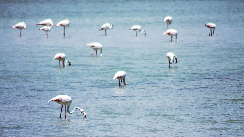 Large Group Of Animals Bird Animals In The Wild Nature Beauty In Nature Water Day Tranquility Phototime Timeforphoto EyEmNewHere Millennial Pink The Week On EyeEm