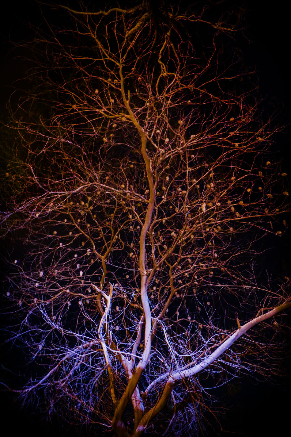 Abstract Backgrounds Bird Birds Branch Change Close-up Dead Plant Dry Focus On Foreground Full Frame Glowing Growing Growth Leaf Mystery Nature No People Outdoors Plant Sleeping Bird Stem Tree Tree Trunk Twig