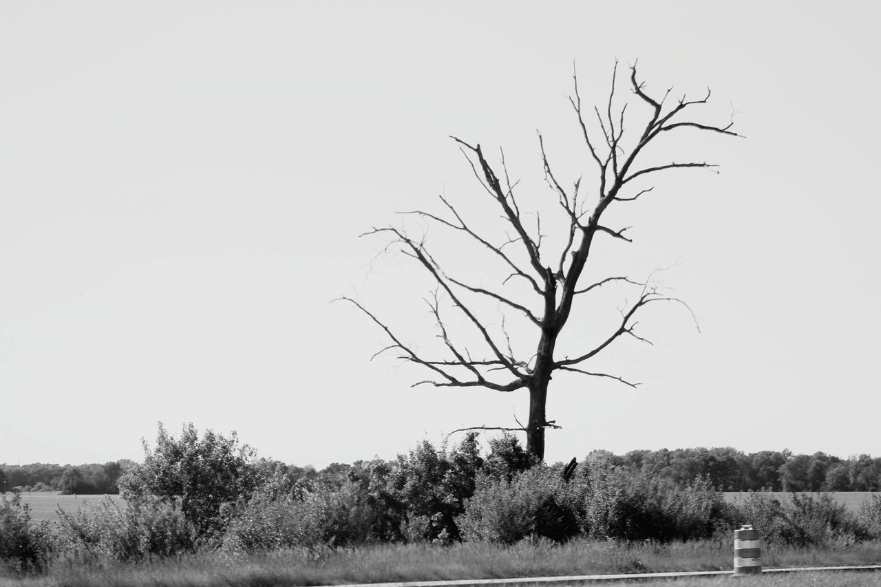 bare tree, tree, landscape, clear sky, tranquility, tranquil scene, nature, lone, branch, scenics, outdoors, beauty in nature, day, no people, field, tree trunk, sky