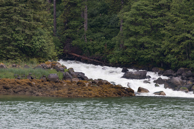 Exploring Alaska's Coastal Wilderness Beauty In Nature Day Forest Nature No People Outdoors Rainy Day River Rock - Object Scenics Tree Water Waterfall Williams Cove Alaska