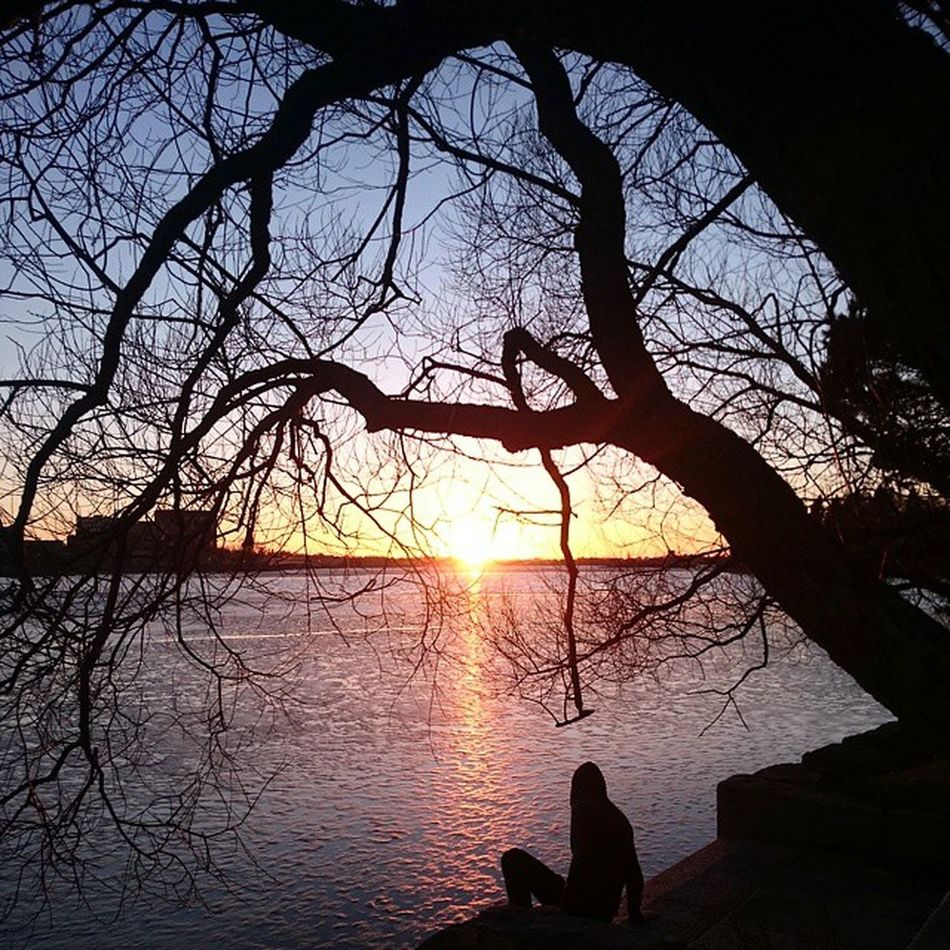 You Make Me Feel So Good 🌞 - Hietaniemi Cemetery - Helsinki Sun Sunset Cemetery Helsinki Hietaniemi Finland Baltic Sea Tree Contrast Nofilter Erasmus