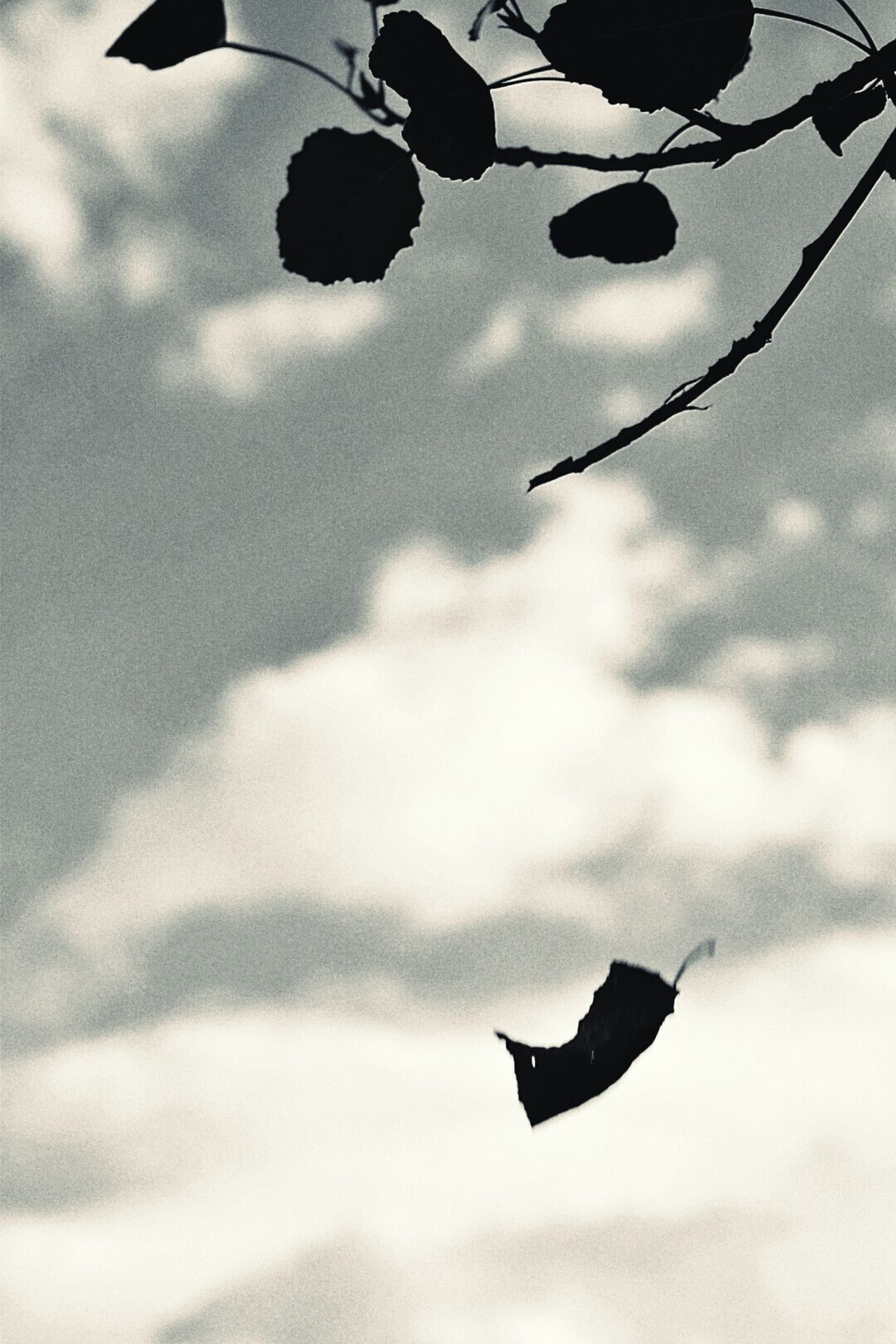 Blackandwhite Lihgts Dark Tranquility Melancholic Landscapes Countryside Sadness Melancholy Detailphotography Darkness No People Outdoors Clouds And Sky Trees Movement Movement Photography Day Fall Summer Sun Sunlight Sunset