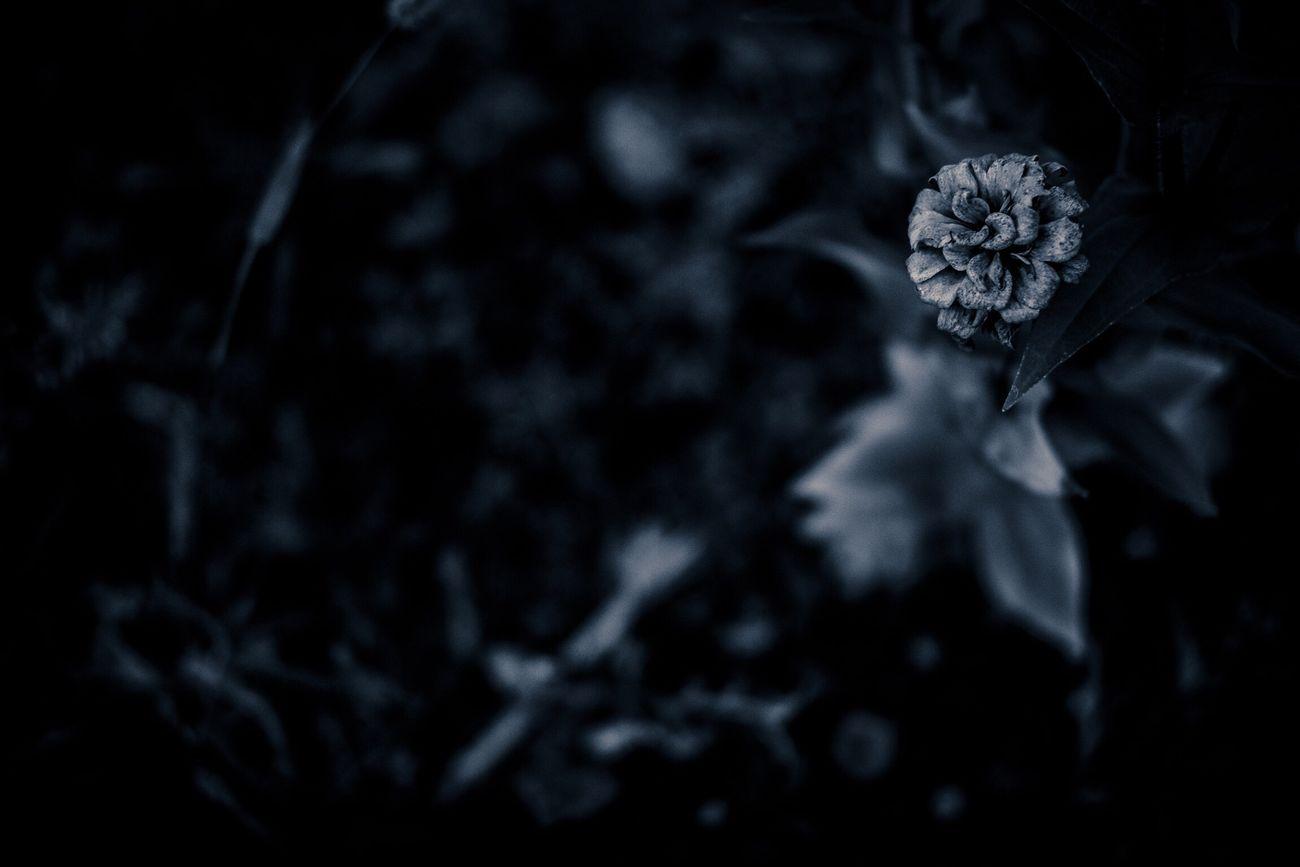 仙台雑景 花