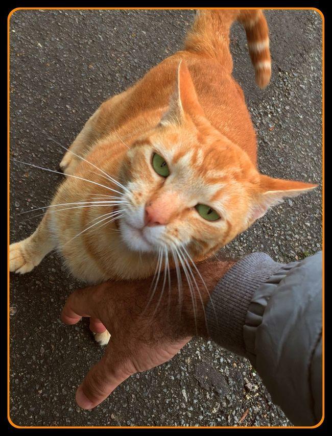 Chat Cats Of EyeEm Cat CHATFIE Catfie Chat D'EyeEm Chats D'EyeEm The Great Outdoors - 2016 EyeEm Awards