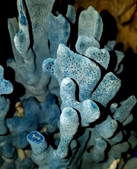 Blue Coral Coral Macro Still Life Photography Fine Art Photograhy Check It Out Nature Sea Life Beauty In Nature Extreme Close-up Outdoors Nature_collection Meditation Natural Pattern Nature_perfection Blue Sea Art Ocean Creature Textured