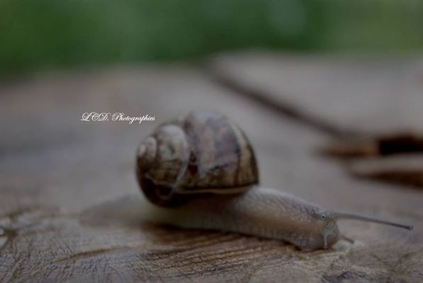 Snail by LCD. Photographies