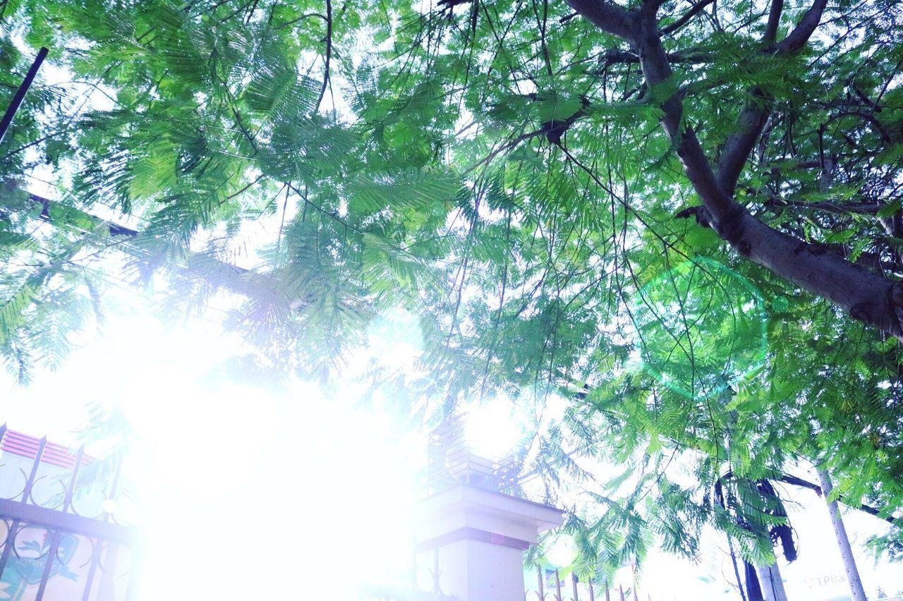 School Sunshine Morning Tree Sky Vietnam ASIAsian]