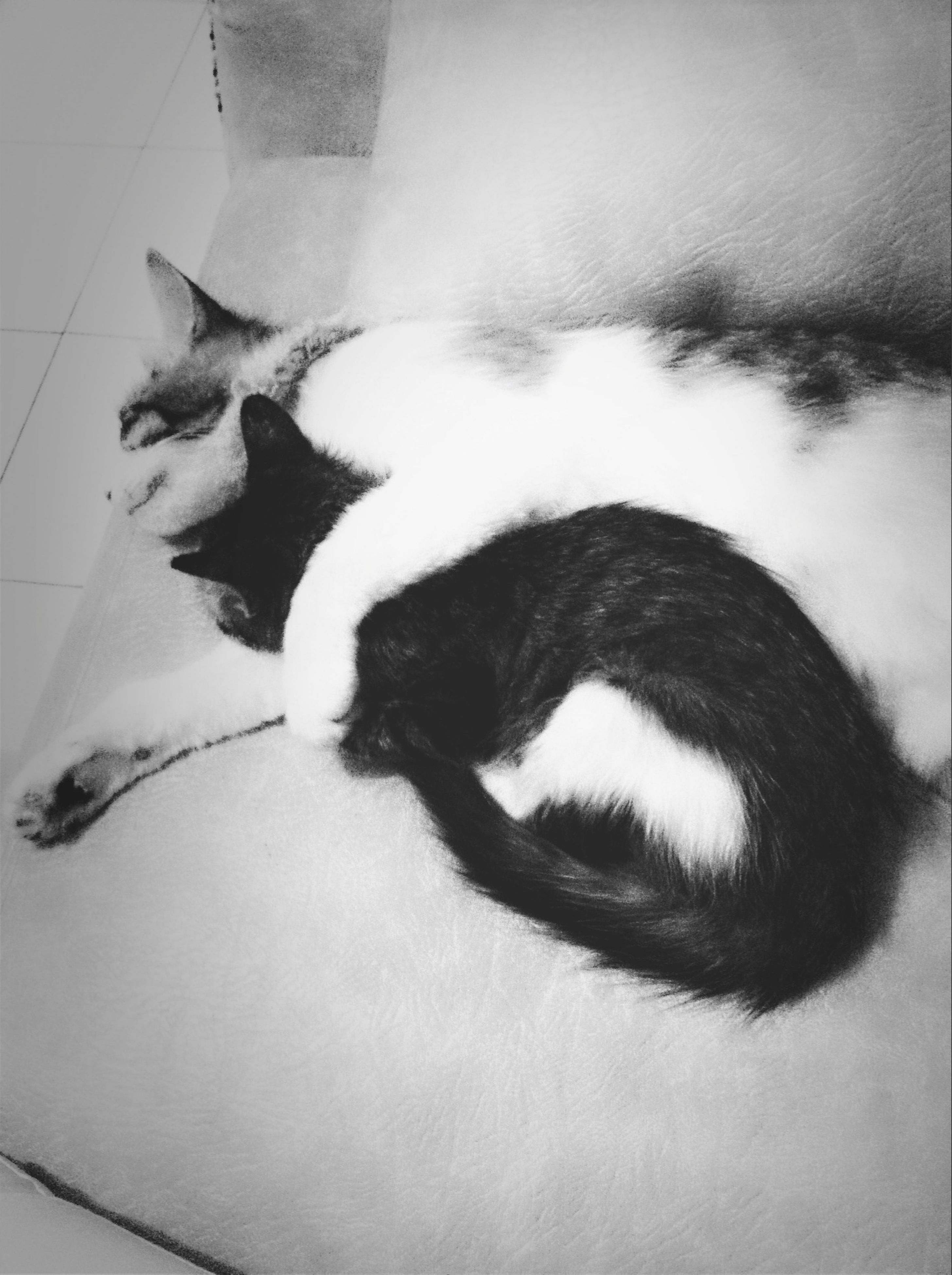 pets, domestic animals, one animal, animal themes, mammal, domestic cat, cat, indoors, relaxation, feline, high angle view, sleeping, resting, lying down, whisker, black color, dog, close-up, home interior, bed
