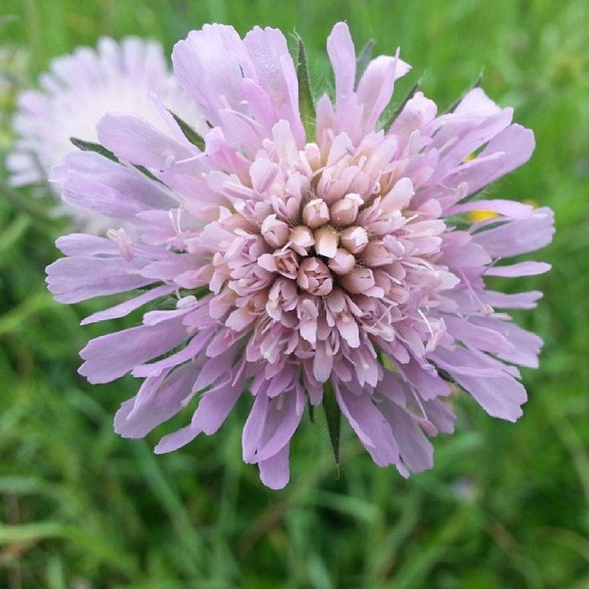 Bestfoto Bestshot Bestnature Bestflowers flowers nature europe germany